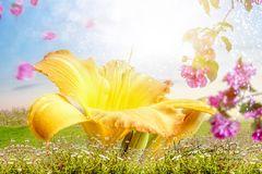 Flowers paradise