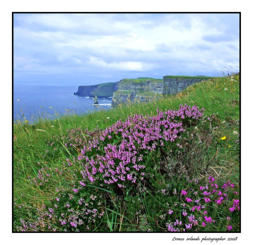 Flowers to Cliffs of Moher 2