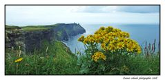 Flowers to Cliffs of Moher