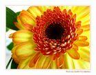Flowers Vol.1 - Orange Mood