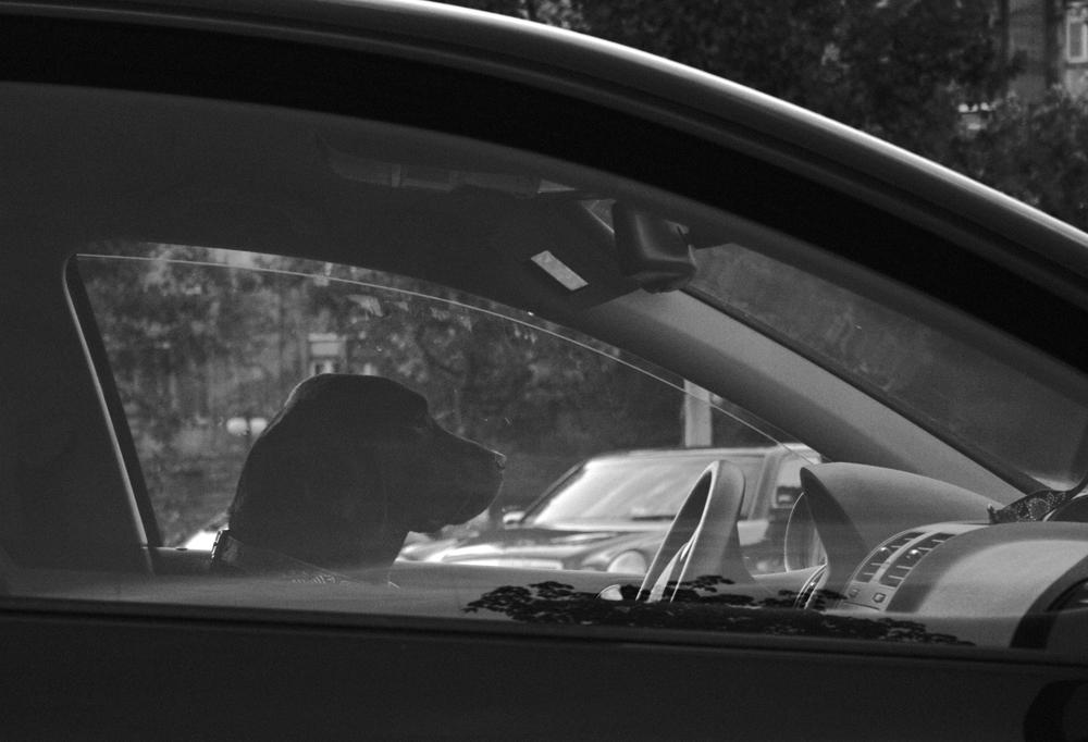 Fluchtwagenfahrer