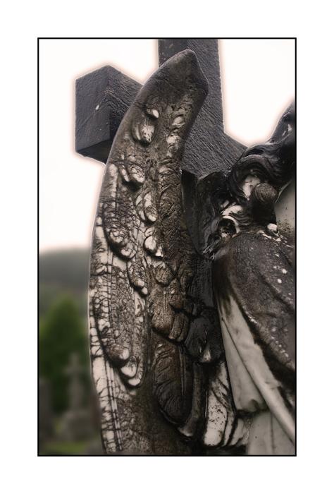 Flügel, dich dich zum Himmel tragen sollen