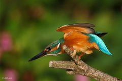 Flügel einklappen