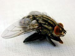 Flügeldetails