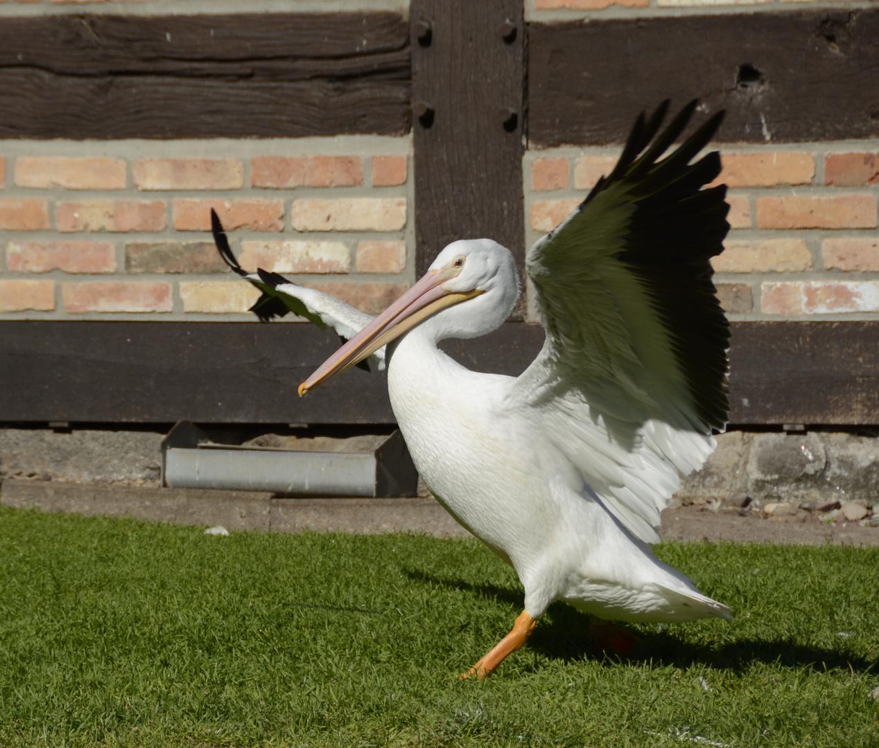 Flügelgymnastik