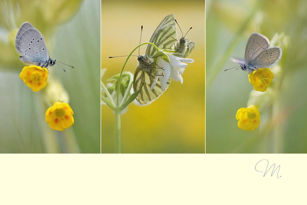 Flügelleichter Frühlingszauber