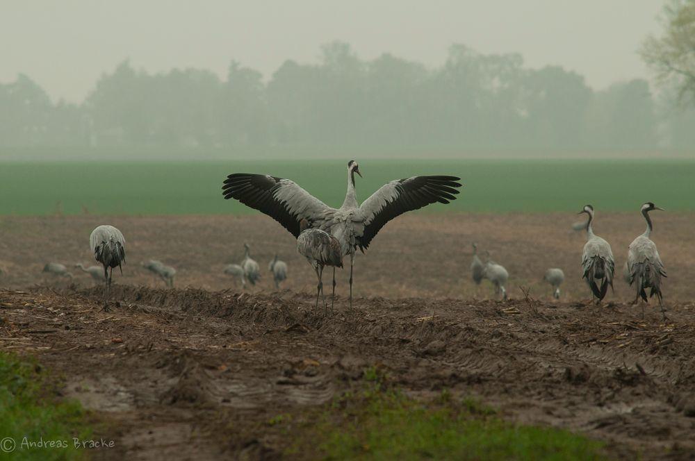 Flügelschlag im Nebeldunst