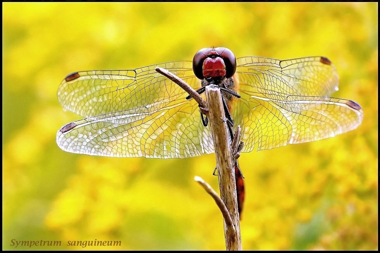 Flügelstrukturen