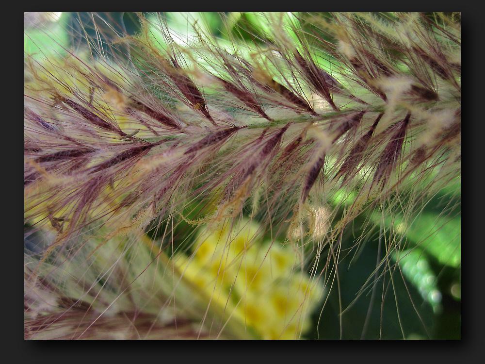 >>>>>> fluffy grass