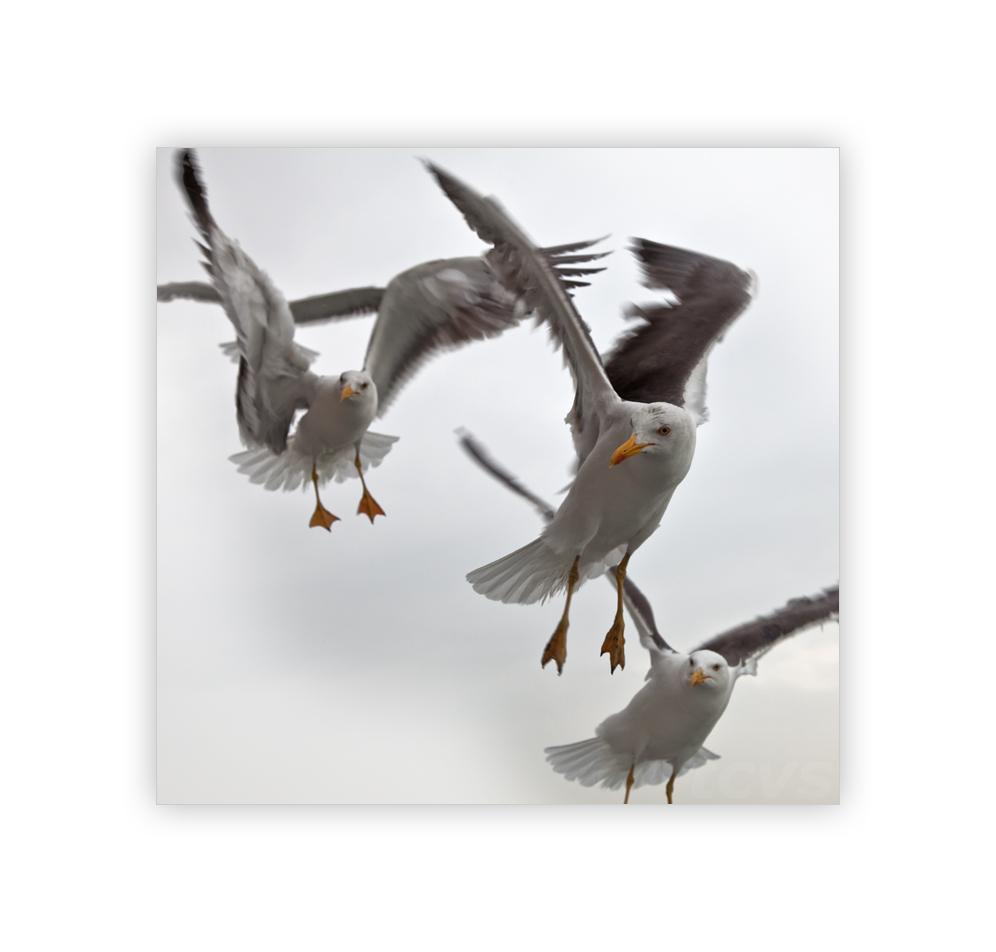 Flug der Möwen