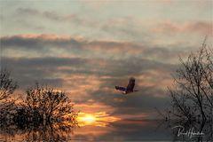 Flug des Adlers ....