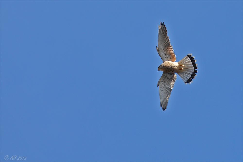 Flug des Falken - 1