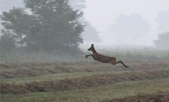Flug durch den Morgennebel