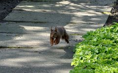 FLUG Hörnchen !!!