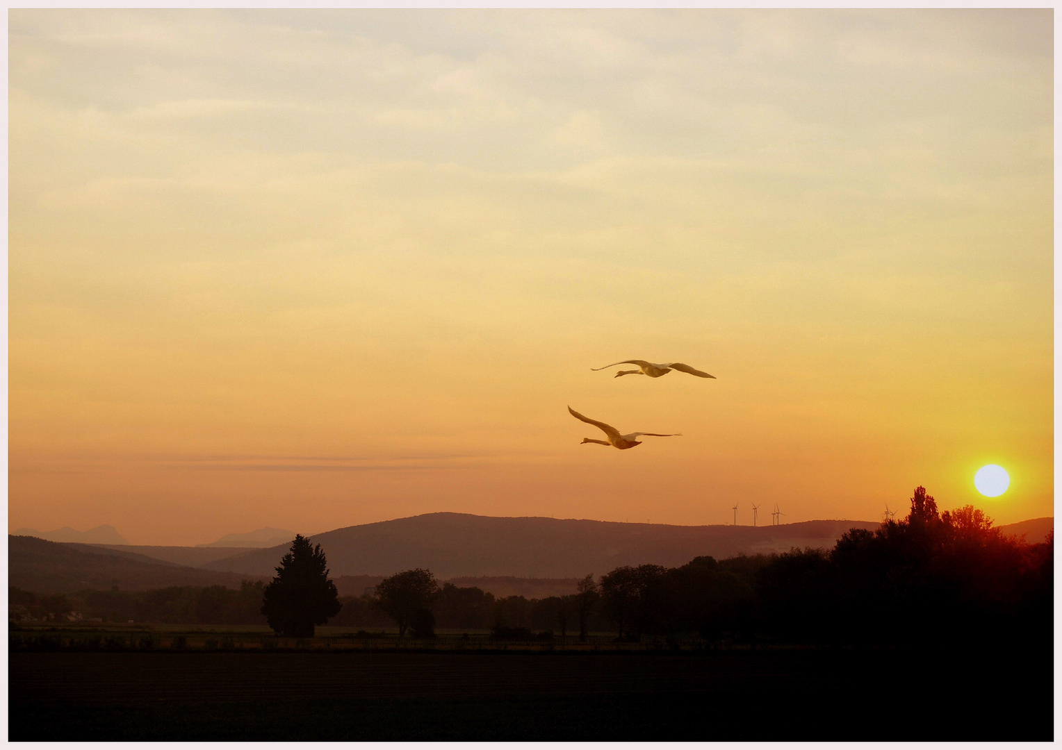 Flug in den Morgen  -   Vol au soleil levant