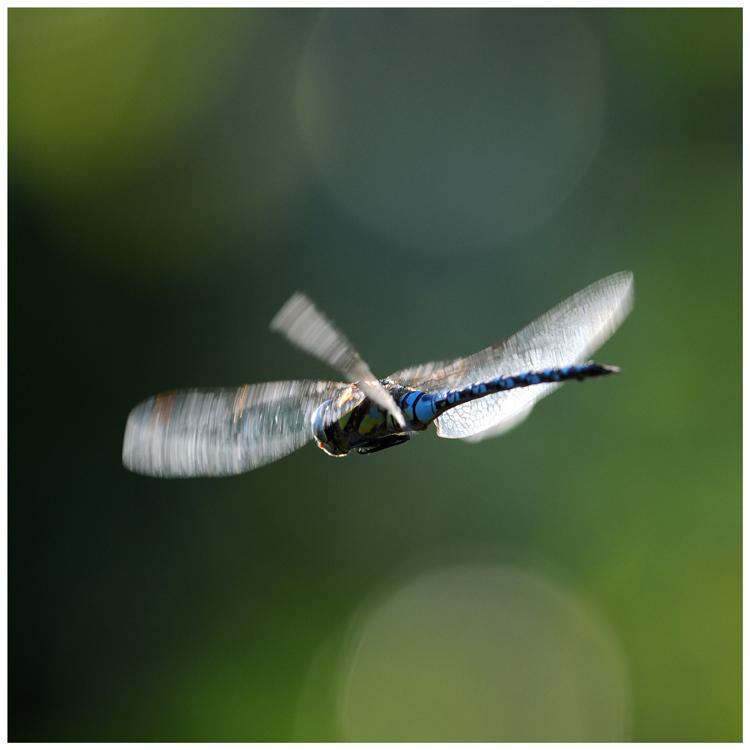Flug in's Licht