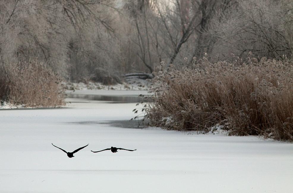 Flug über das Eis..