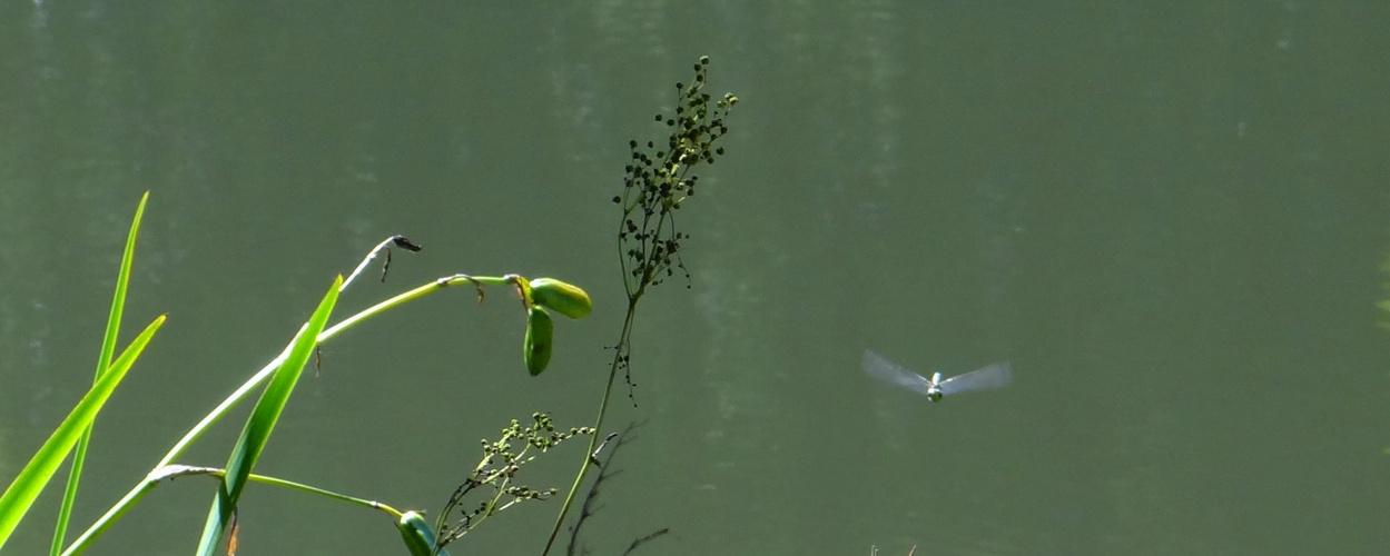Flug über den See