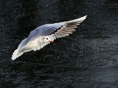 Flug übers Eis