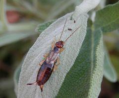 Weitere Insekten
