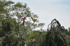 Flugshow Vogelpark Walsrode