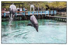 Flugstudie von Delphinen