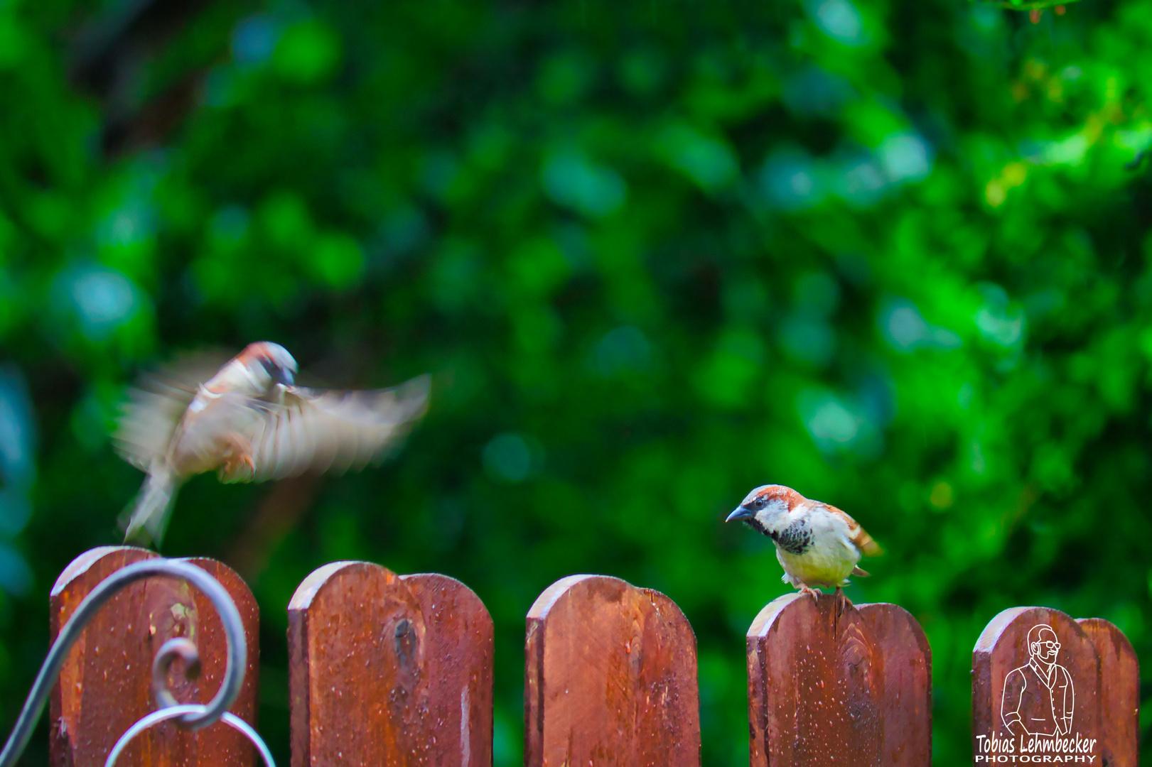 Flugverkehr im Garten