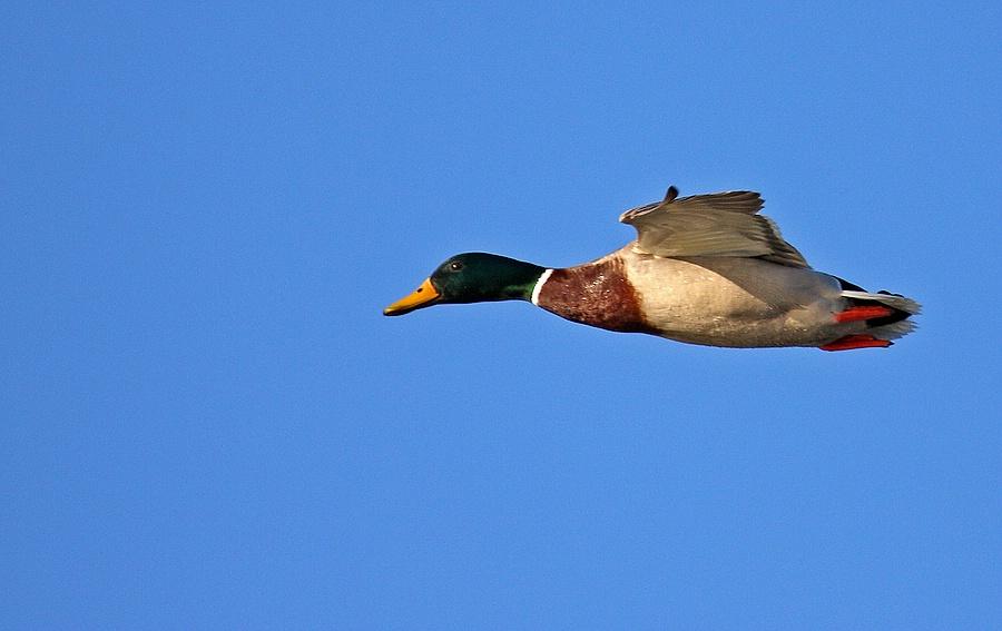 Flugwetter I