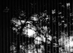 fluid.wave.shades (p.1)