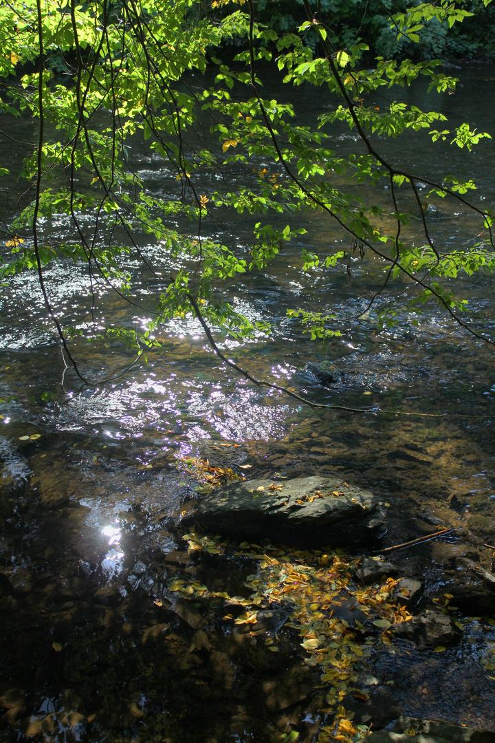 Fluß im Abendwind