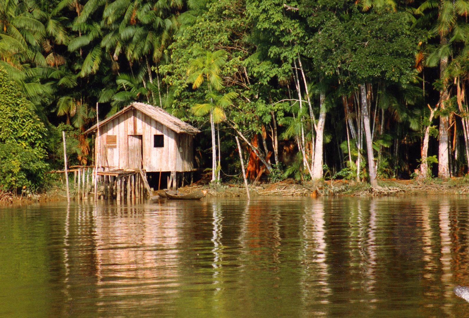 Fluss und Regenwald