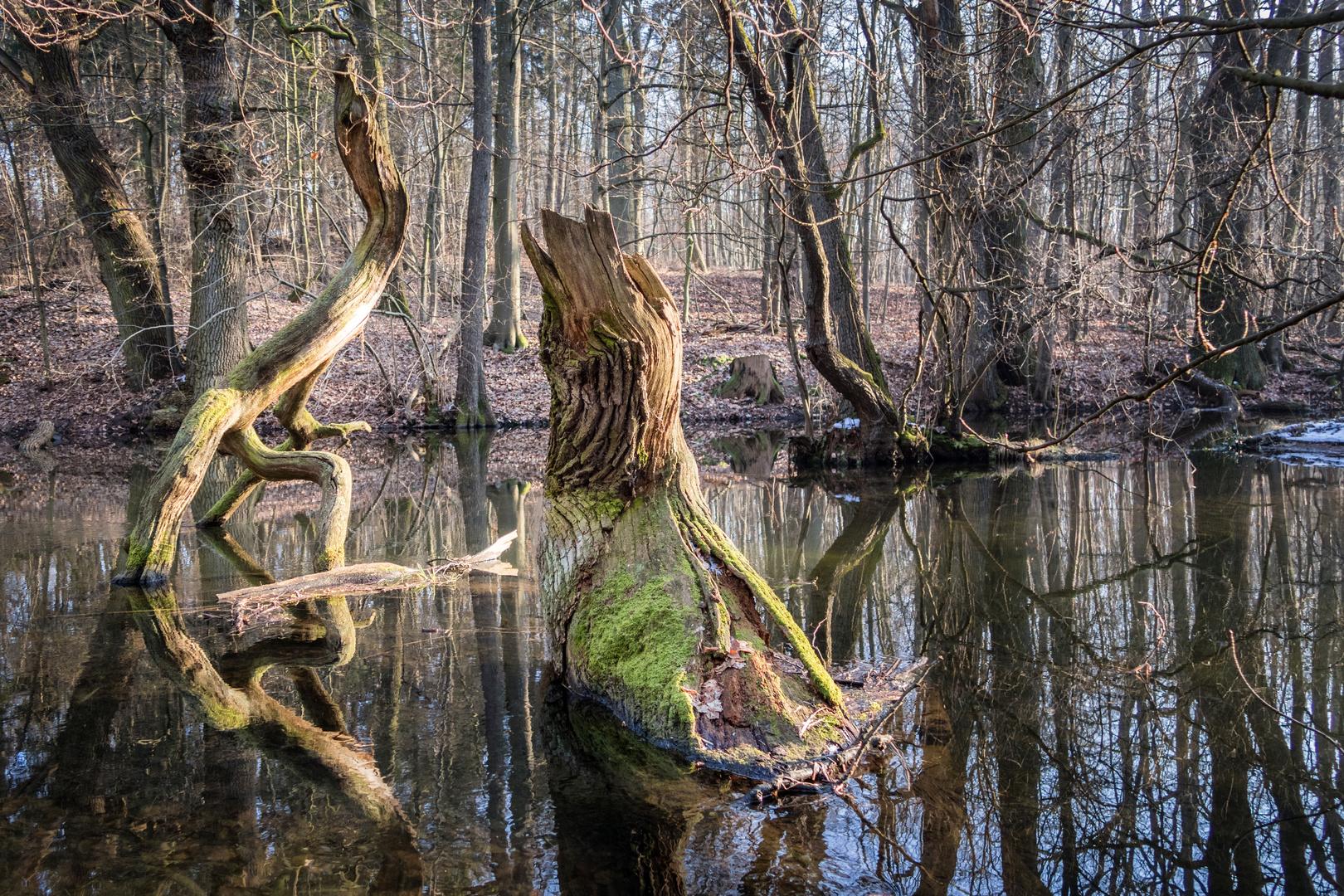 Flussbewohner