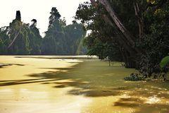 Flußfahrt auf dem Kinabatangan