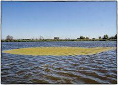 Flusslandschaft an der Oder