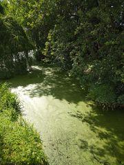 Flusslandschaft in Berlin 3