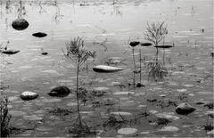 Flusslandschaft in Schwarz-Weiß.