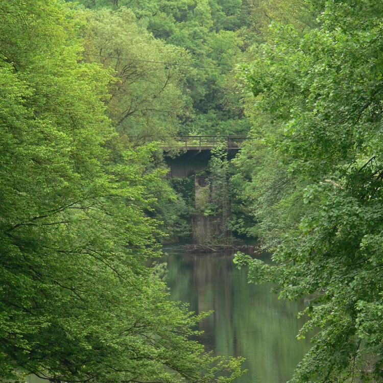 Flußquerung im Urwald