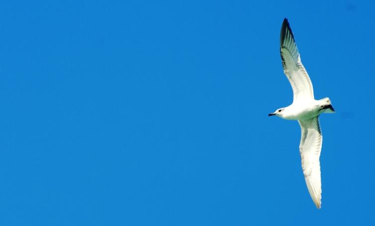 Fly.......