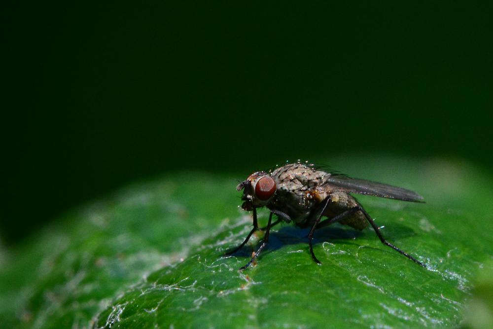 fly 4