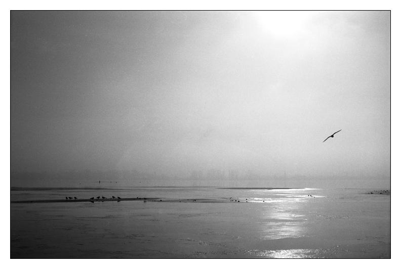 - _fly away -