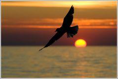 Fly away, Abendstimmung an der Ostsee