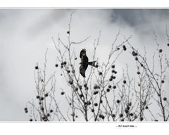 .. fly away bird ...