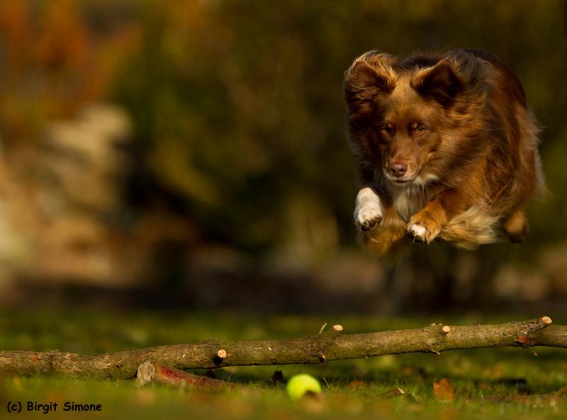 Fly fly away!!