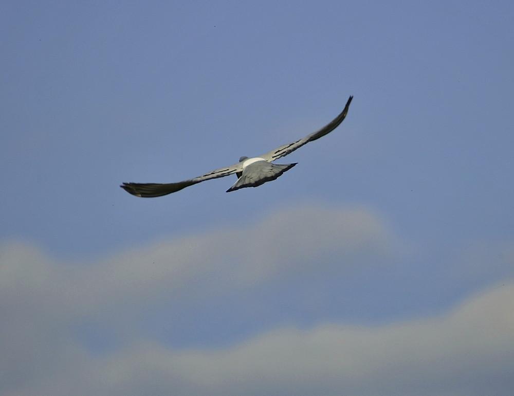 Fly fly away...