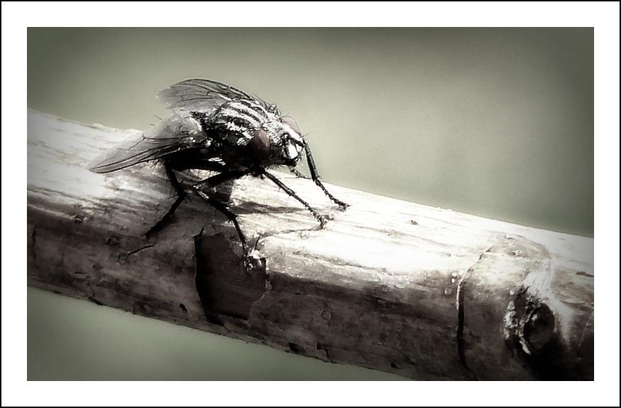 Fly! Fly fly away