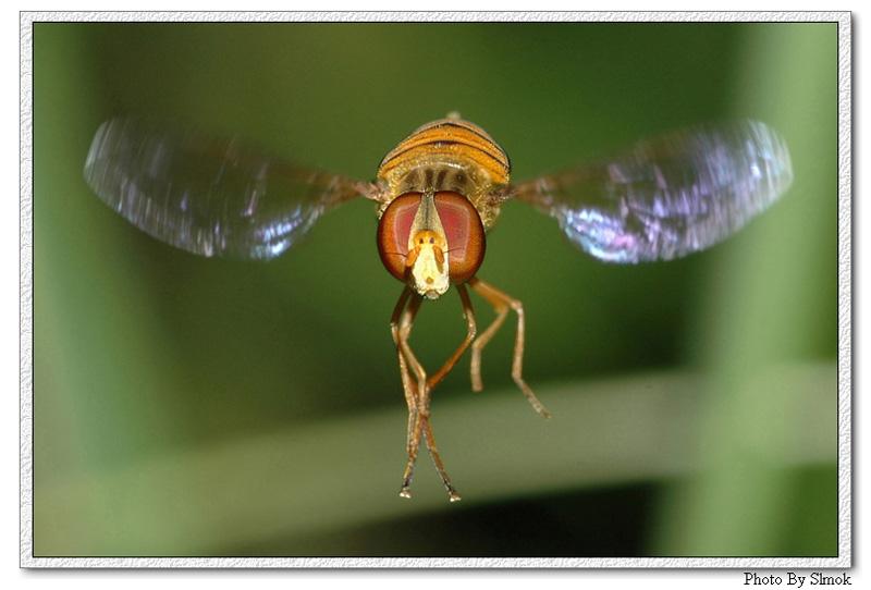 fly flying