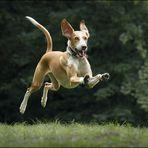 - Fly Halo, fly! -