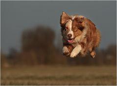 Fly kann fliegen