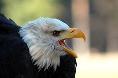 Fly like an Eagle..