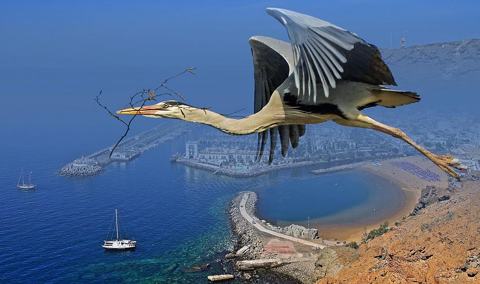 Fly over the Puerto de Mogan...
